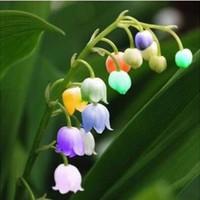 مزيج من زنبق الوادي زهرة بذور lflower بذور نبات داخلي بونساي 50 الجسيمات / الكثير