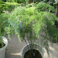 꽃 씨앗 30pcs 분재 씨앗 화분 대나무 씨앗 마술 봄 꽃과 식물 씨앗 정원 D044