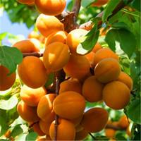 Редкое абрикосовое дерево семена органических фруктов абрикос дерево дерева семена дома садовые фруктовые растение 5 шт. Семена бонсай, можно съесть! A029.