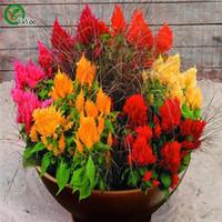 분재 꽃 Cockscomb Seed 파파야 나무 씨앗 과일 꽃 냄비 재배자 정원 분재 꽃 씨앗 100 입자 / lot B32