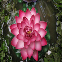 Colour/Red & Whit//water lily flower Bowl-Pond Lotus seeds garden decoration plant 10pcs F134