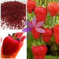 Горячая 1000 + гигантские семена клубники супер большой красный клубника бонсай фрукты