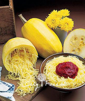 Spaghetti Squash Vegetable 10 Seeds   Bag Easy to Grow from ...
