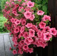Petunia 씨앗 충격 웨이브 믹스 200 펠렛 씨앗 새로운 다양한 정원 장식 식물 L48