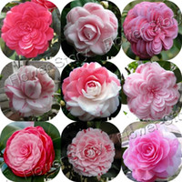 vente en gros20 MIXTES DOUBLE CAMELLIA IMPATIENS Balsamina Flower Seeds Plant bonsaï