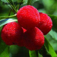 10 Particules / Sac Arbutus Unedo Fraise Arbre De Délicieuses Graines De Fruits Chinois Pour Un Jardin Sain Et Facile À Grandir