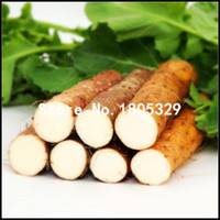 Un paquet de graines d'igname chinoise 10 Pcs Plantes vivaces Dioscorea Opposita Graines de légumes à base de plantes rares