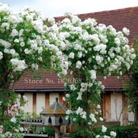 Mix Climbing Rose Seeds Bonsai Balcone Fiore Semi in vaso Giardino domestico di DIY 50 Particelle / lotto P012