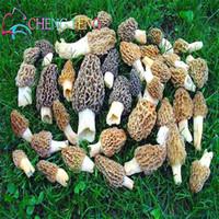심기 정원 야채 씨앗 100 개 / 많은 버섯 줄기 종자 식물 분재 과일 야채 일본 가정 녹색 유기농 냄비