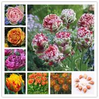 الجملة 5 PC خلط لمبات توليب ، زهرة توليب ، (ليس بذور توليب) حديقة نبات الجمال Colorbonsai
