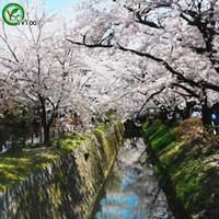 뜨거운 판매 벚꽃 씨앗 꽃 씨앗 분재 식물 홈 정원 10 입자 / 많은 e001