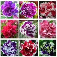 Garten Petunia Blütenblätter Blumensamen für Garten Petunie semillas de Petunien, 100 Samen / Tasche