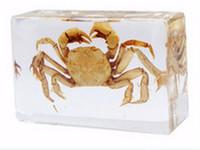 Aprendizagem de Espécime de Caranguejo Embutido Resina AprendizagemEducação BrinquedosPresentes Rato Transparente Paperweight Crianças Novo Tipo Biologia ScienceDiscory Kits