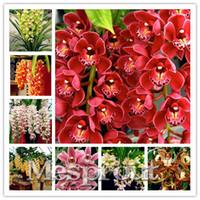 100 قطع cymbidium السحلية ، نادر بذور cymbidium ، بونساي بذور زهرة بذور ، 22 الألوان للاختيار ، نبات للمنزل حديقة