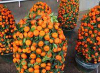 30 semi / confezione Semi di frutta commestibile in vaso Bonsai che si arrampicano sui semi dell'arancio