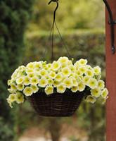 высокое качество много цветов висит петуния семян 4 сезона крытый балкон легко посадить семена цветов 200 шт.