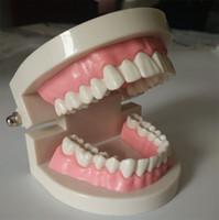 좋은 디자인 치과 치과 의사 Flesh 핑크 껌 표준 치아 이빨 모델
