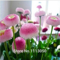 200 pcs sorvete de morango pouco Sementes de Margarida Bonsai planta Sementes para casa jardim Bonsai Planta Sementes de Flores