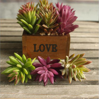 Wholesale Desert Garden Plants Buy Cheap Desert Garden Plants 2019