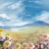 Blue Sky White Clouds Sfondi digitali per fotografi Fiori di crisantemo Scenografie per matrimoni all'aperto