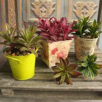 Toptan-Renkli Bitkiler Sulu Çim Yapay Bitki Peyzaj Sahte Çiçek Düzenleme Ev Dekorasyonu Bitki Şenlikli Parti Malzemeleri