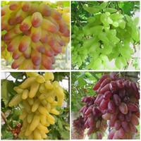 مختلطة 30 بذور / حزمة فناء النباتات ، بذور الفاكهة لذيذ ، بذور العنب الذهب الاصبع