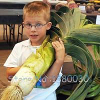 Питательный китайский лук-шалот семена лука семена овощных семян огород
