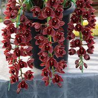 100 шт. темно-красный китайский Цимбидиум орхидеи семена цветов крытый горшечных цветов семена цикады орхидеи семена