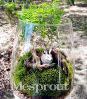 30 PCS (Mimosa Pudica) Semente, bonsai Mimosa Árvore Sementes de Flores, prever terremotos Folhagem Plantas de Flores Perenes para casa jardim