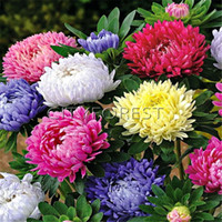 Mixed Color Chinese Aster Callistephus chinensis 200 Seeds E...