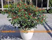 Semi ornamentali Mini Hot Pepper, 100 semi / confezione, vegetale bio Chili Bonsai Plant caldo