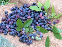 Горшечные семена черники питательные и вкусные семена фруктов DIY Главная бонсай богат антоцианов 100 частиц / лот