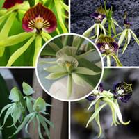 도매 50 혼합 된 낙 지 씨앗 중국 희귀 한 꽃 씨앗 분재
