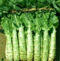 Home Gartenpflanze Spargel salat150 Samen Chinesische Celtuce, Spargelsalat, Big Stem Salat Sellerie Salat Gemüsesamen