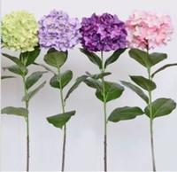 wholesale100 수국 꽃 씨앗 랜덤 24 Kindplant 분재