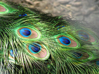 정품 Natura 10-12inch L 공작 깃털 파티 장식을위한 우아한 장식 액세서리 고품질 200pcs / lot 무료 배송