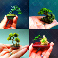 Bir Paket 50 Adet Mavi Ladin Tohumları Picea mini Ağacı Saksı Bonsai Avlu Bahçe mini Bonsai Bitki Çam Ağacı Tohumları