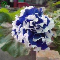 피튜니아 씨앗 꽃 냄비 화분 정원 분재 꽃 씨 200 입자 / lot e021
