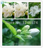 50 PZ semi di gelsomini bianchi Dolce anima Gelsomino semi di semi di bonsai per giardino di casa spedizione gratuita