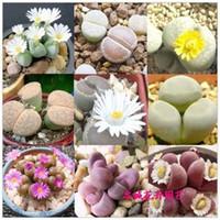 30 graines / paquet Graines de plantes succulentes - pierre brute fleur - pierre fleur bunny graine de pierre graine de semence Tetragonia