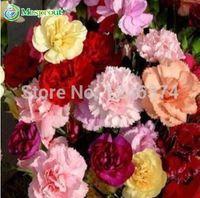100 шт. / пакет, семена гвоздики, горшечные семена, семена цветов, сорт полный, скорость бутонизации 95%, (смешанные цвета)