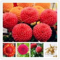 도매 2pcs 붉은 달리아 전구 꽃, (달리아 씨앗이 아닌), 분재 꽃 전구 분재 식물 정원
