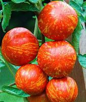 100 pcs / sac graines de tomates rares, graines de bonsaï de tomates rares, bonsaï graines de fruits de légumes biologiques, plante en pot pour la maison jardin