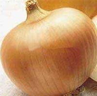 100 Giant Onion Yellow Sweet Spanish semillas germinación de semillas de hortalizas 95%, semillas de cebolla Giant Vegetable para jardín bonsai