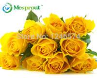 Frete grátis 100PCE bonsai sementes de flores, sementes de rosas amarelas, 95% taxa de germinação, Rose Flor sementes de jardim de casa bonsai decoração