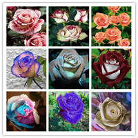 Редкие семена крови розы, 200шт бонсай семена цветов, высокие растения