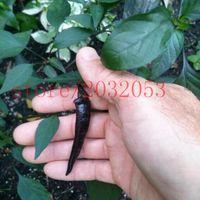100 핫 블랙 코브라 페퍼스, 칠리 씨앗. 가정용 심기 용 레어 NO-GMO 야채 씨앗