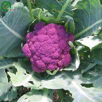 Sementes de couve-flor roxa Nova Chegada Bonsai Orgânicos Sementes de Hortaliças para Casa Jardim 20 partículas / saco r025