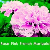 wholesale200 роза розовый цвет французский семена календулы (бархатцы ), великолепный цвет,растение бонсай