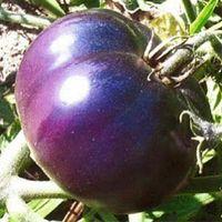 100 частиц / Лот гигантские семена помидоров, семена овощных культур балкон горшках фиолетовый помидор легко расти
